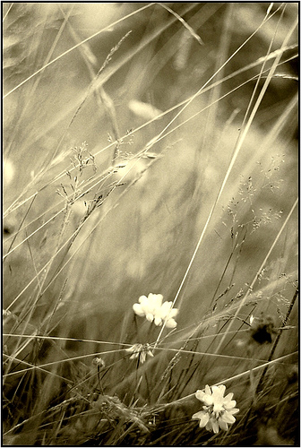 Iarba, flori