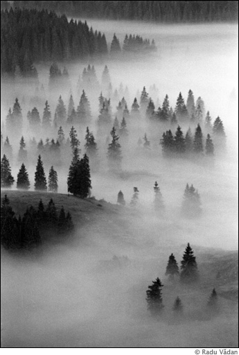 Brazi in ceata